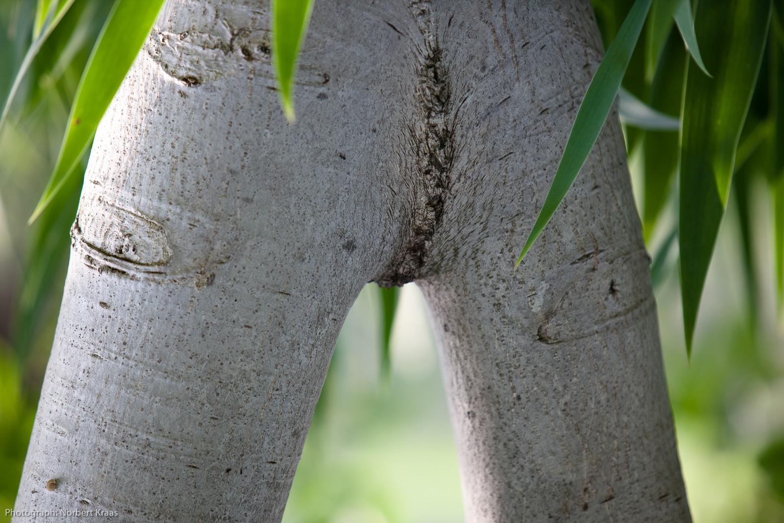Wer sagt mir, wie der Baum heißt?