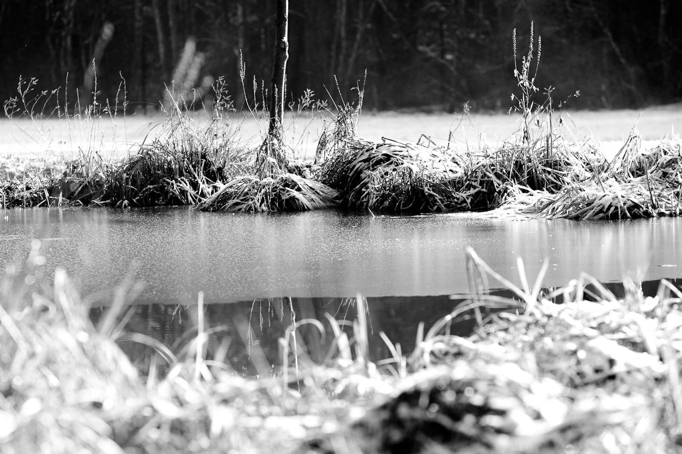 Teich bei Bebenhausen. Foto: Norbert Kraas