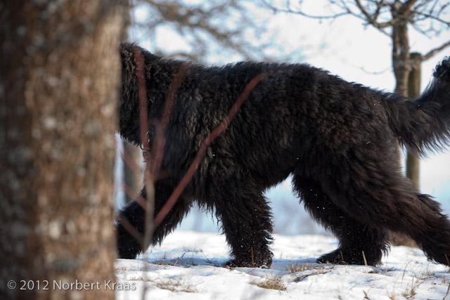 Bärenpanther in Süddeutschland