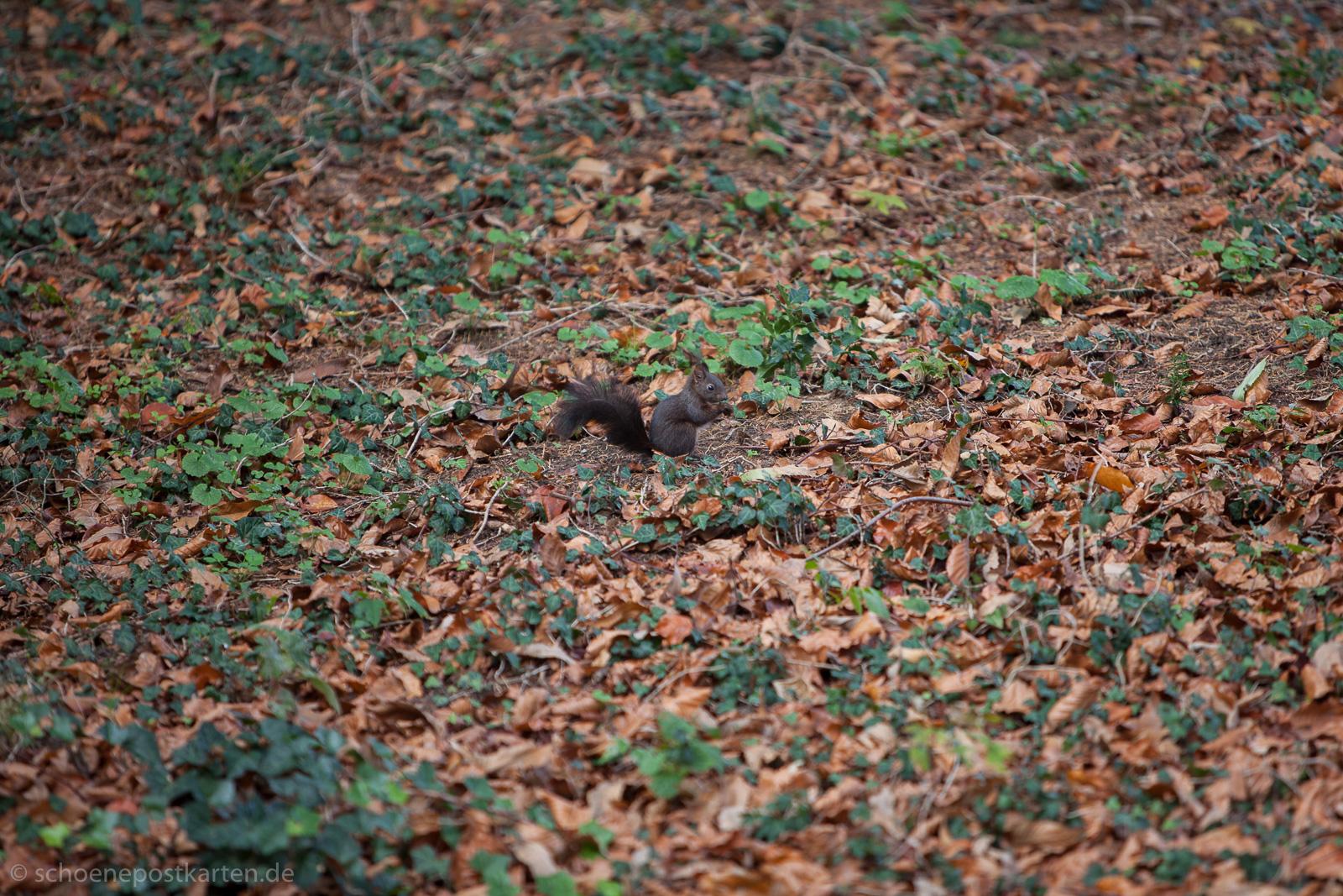 Ohne Murren fielen die Blätter im Garten des Otto-Dix-Hauses auf der Höri
