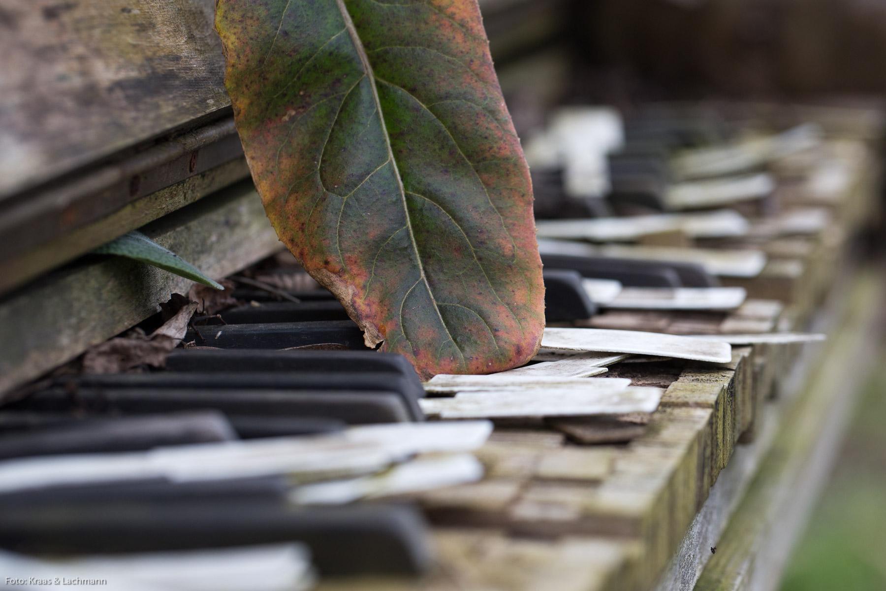 alt Nicht wohltemperiert, sondern grün ist das Gartenklavier bei den Staudenmädchen. Foto: Kraas & Lachmann