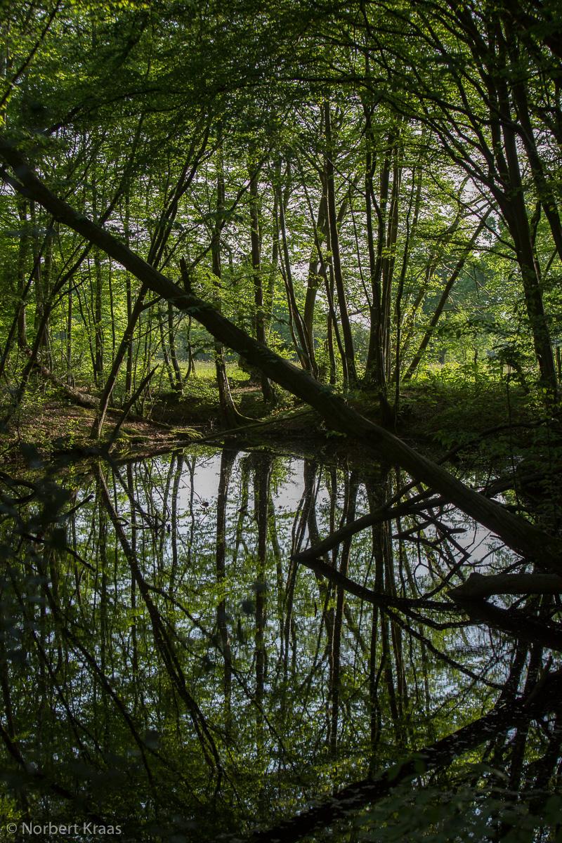 """""""Die Stille eines Waldes ist ansteckend, wie die einer Kirche."""" John Lewis-Stempel. Wald in East-Sussex"""