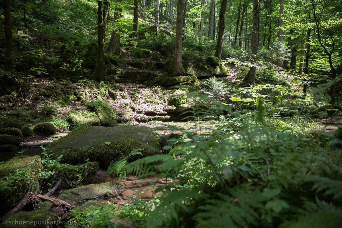 Spätes Sonnenlicht im Wald lässt das Moos hell aufleuchten
