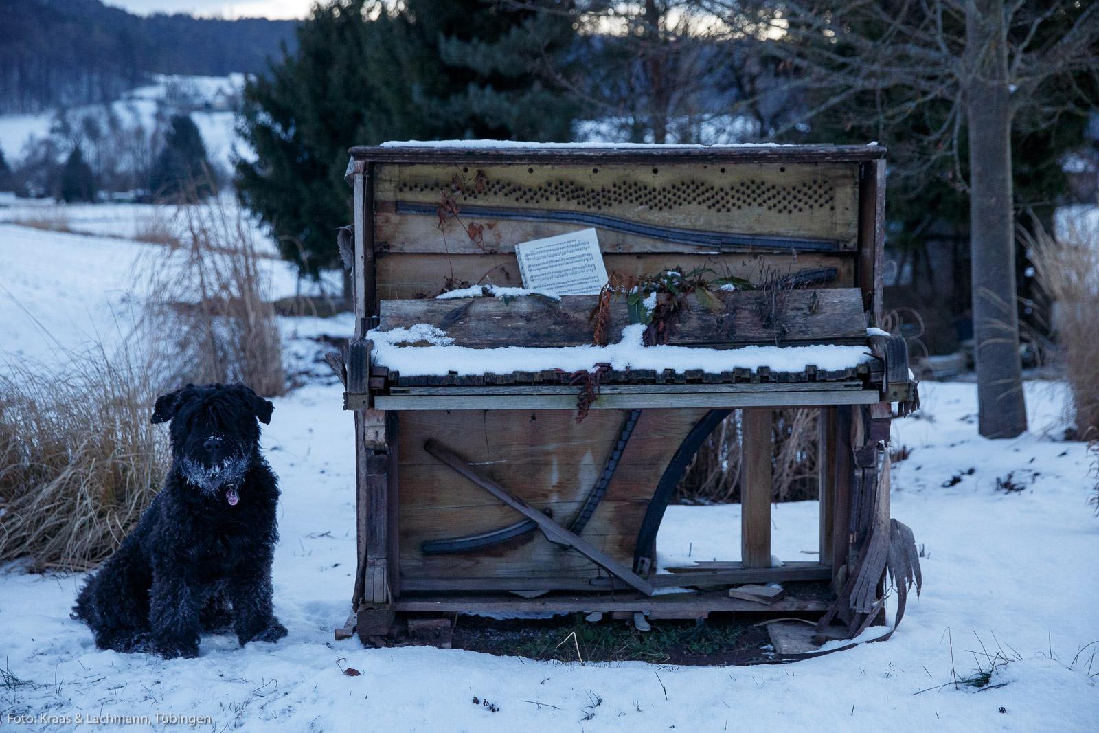 Wohlunterkühltes Klavier mit Hund