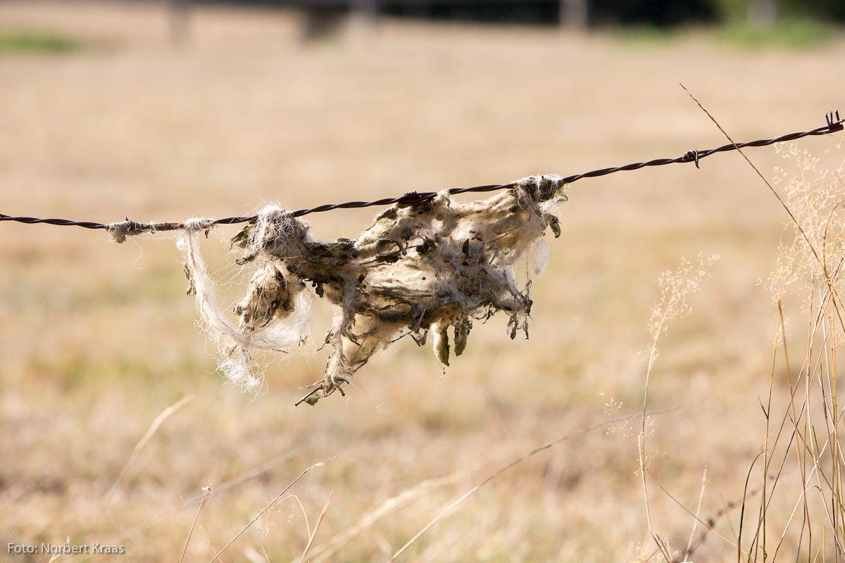 Auch die zweite Hitzewelle in diesem Sommer ist anstrengend: für Menschen, Tiere und Pflanzen