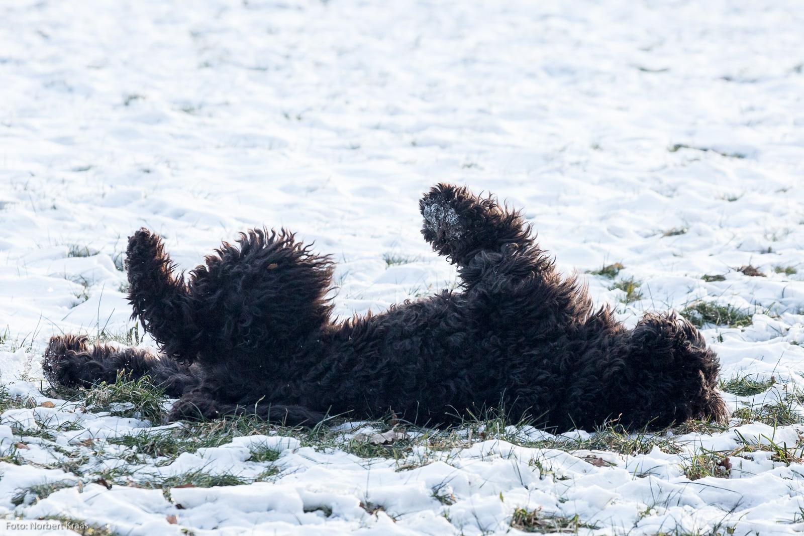 Sehr erfrischend. Zum Frühlingsanfang ein kleines Bad im Schnee bei -8°C