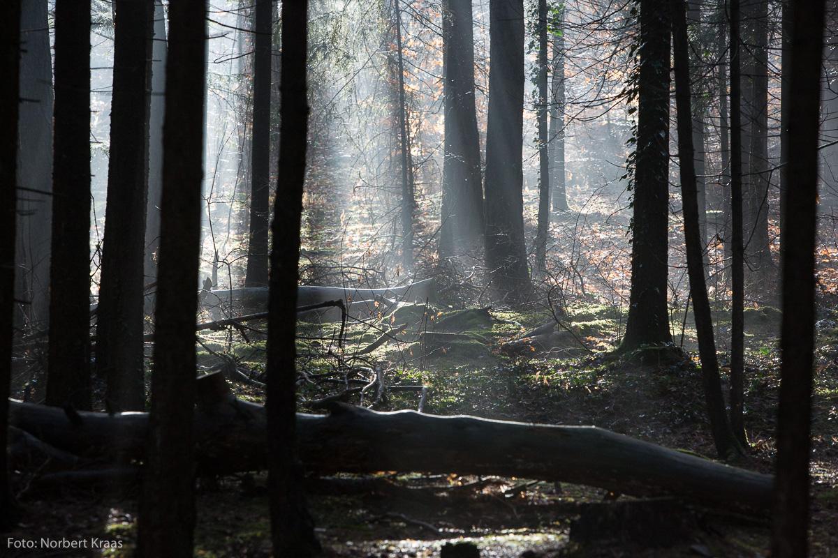 """""""Am wohlsten fühlte sie sich mit ihren Söhnen im Wald."""" aus: Martha und ihre Söhne"""
