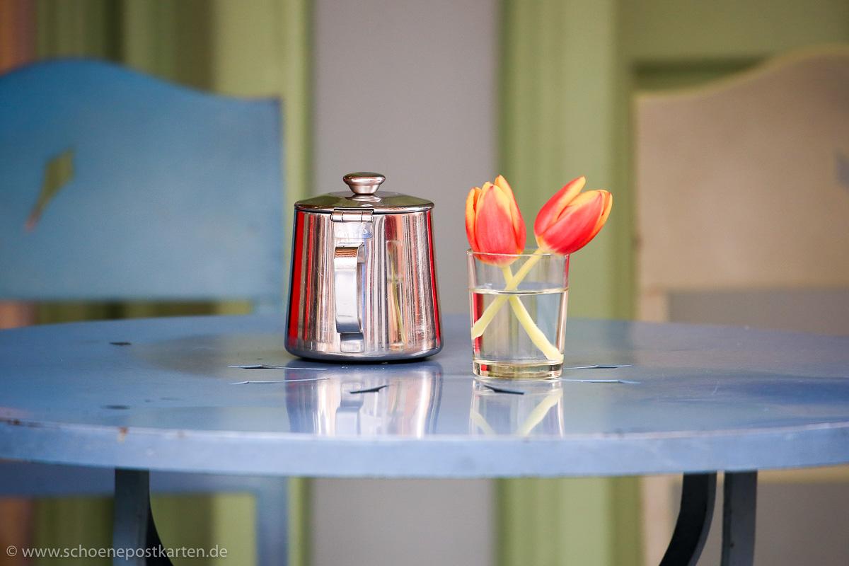 Der Frühling naht, Tulpen sind schon mal ein gutes Zeichen