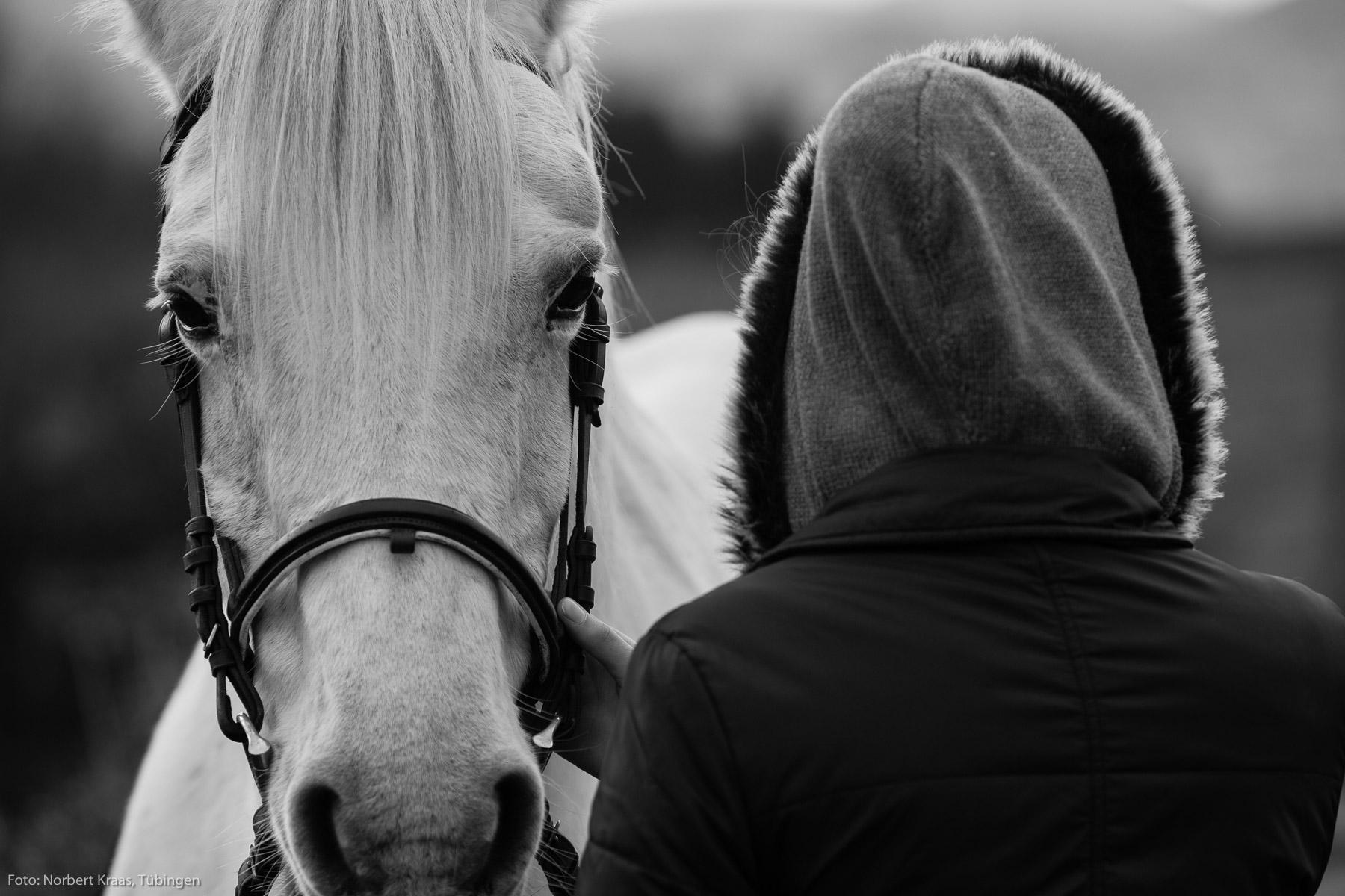 Cheval blanc avec jeune fille en Bourgogne.