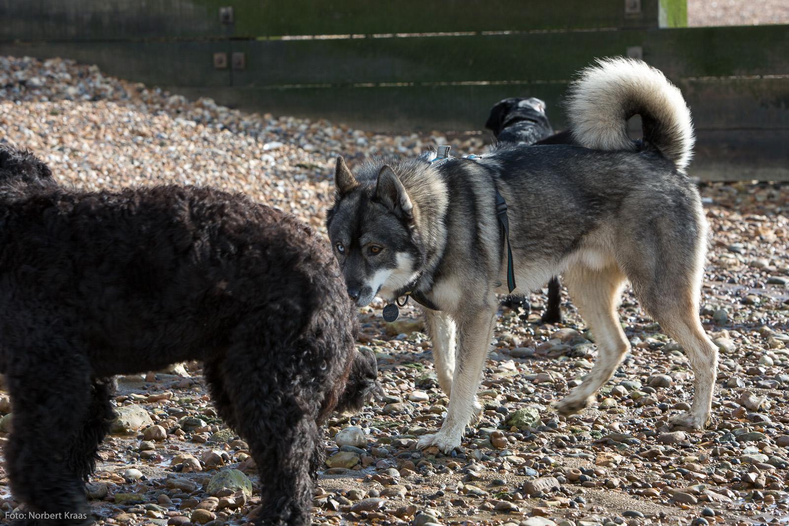Die mit dem Husky tanzt. 2/5. Foto: Norbert Kraas