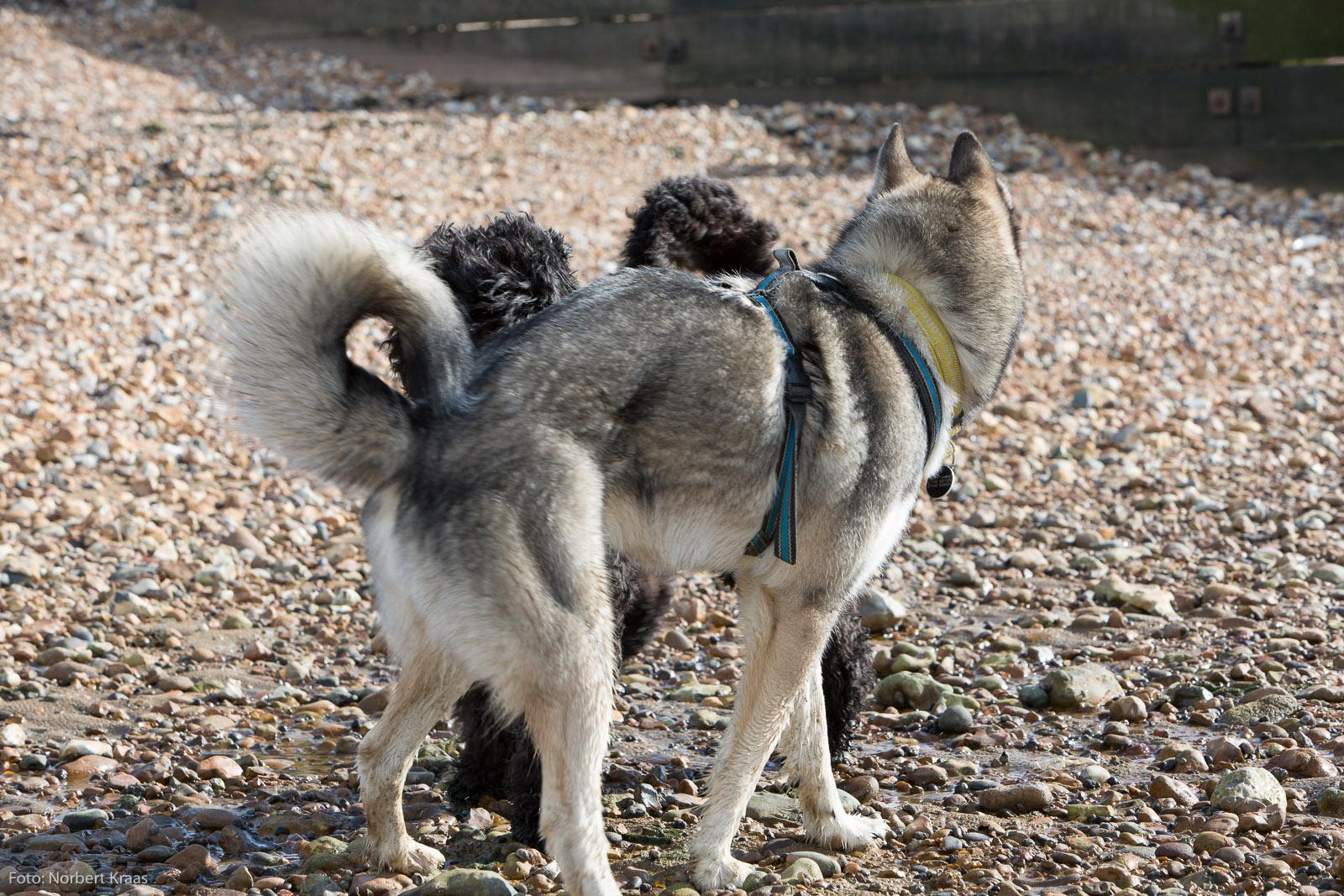 Die mit dem Husky tanzt. 4/5. Foto: Norbert Kraas