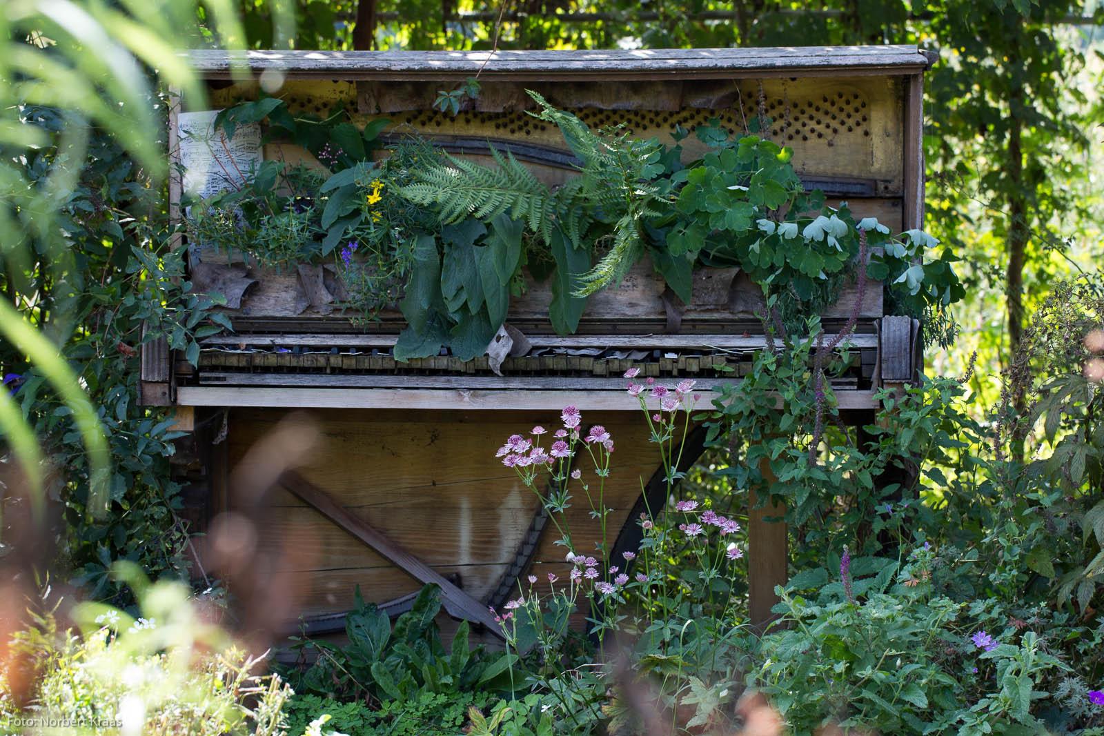 Pflanzenpracht in allen Tönen. Foto: Norbert Kraas