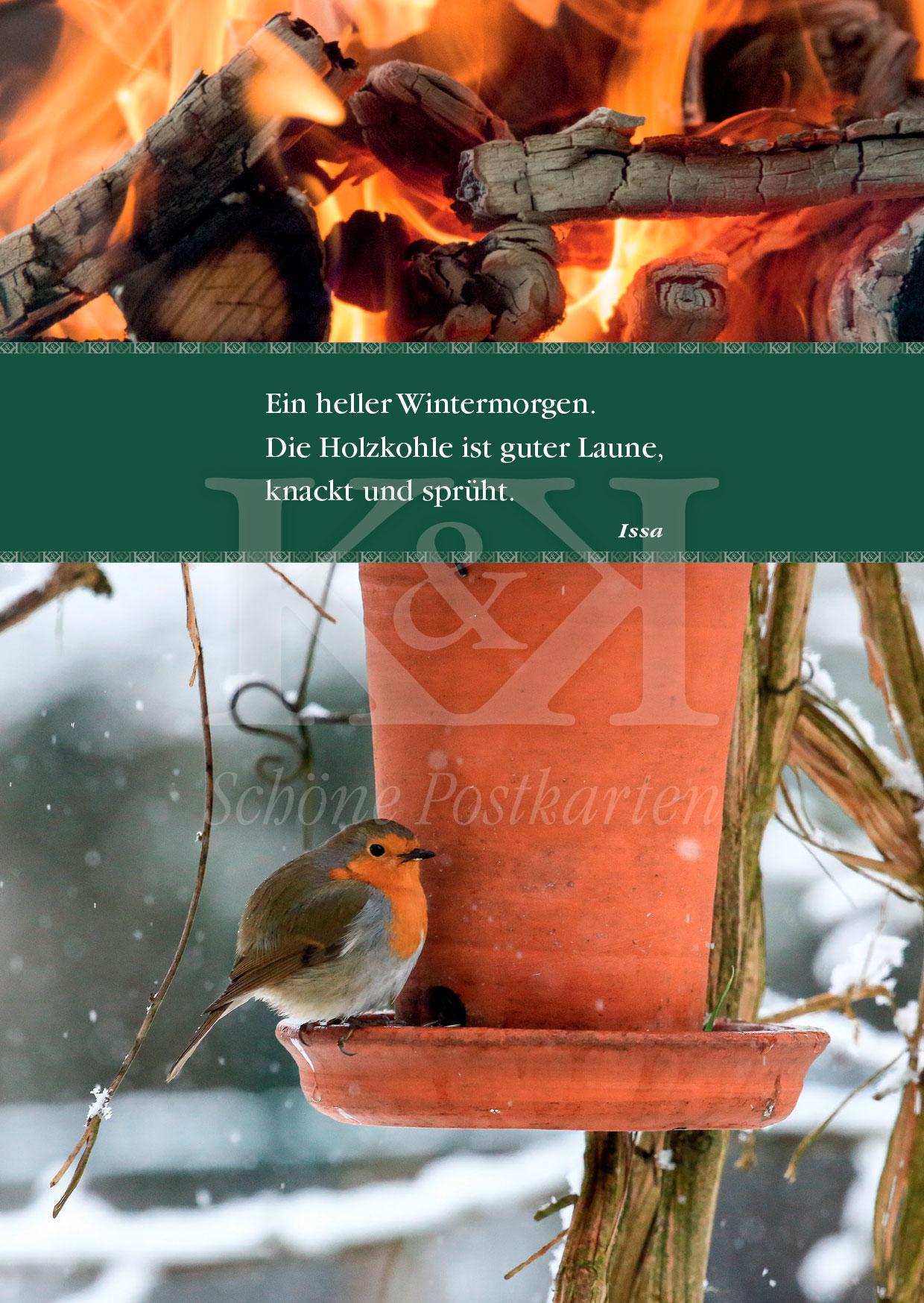 Schöne Postkarte Nr. 122 · Rotkehlchen an einem hellen Wintermorgen. © www.schoenepostkarten.de