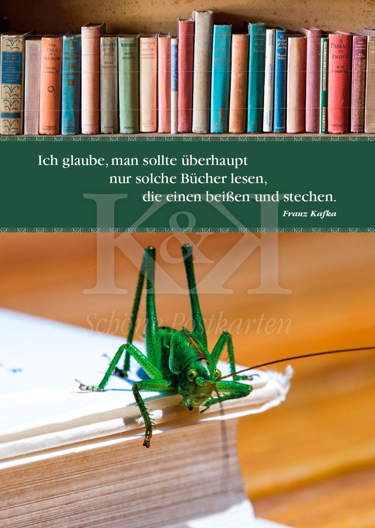 Schöne Postkarte Nr. 20: Kafka, Käfer, Bücher © 2018 www.schoenepostktarten.de