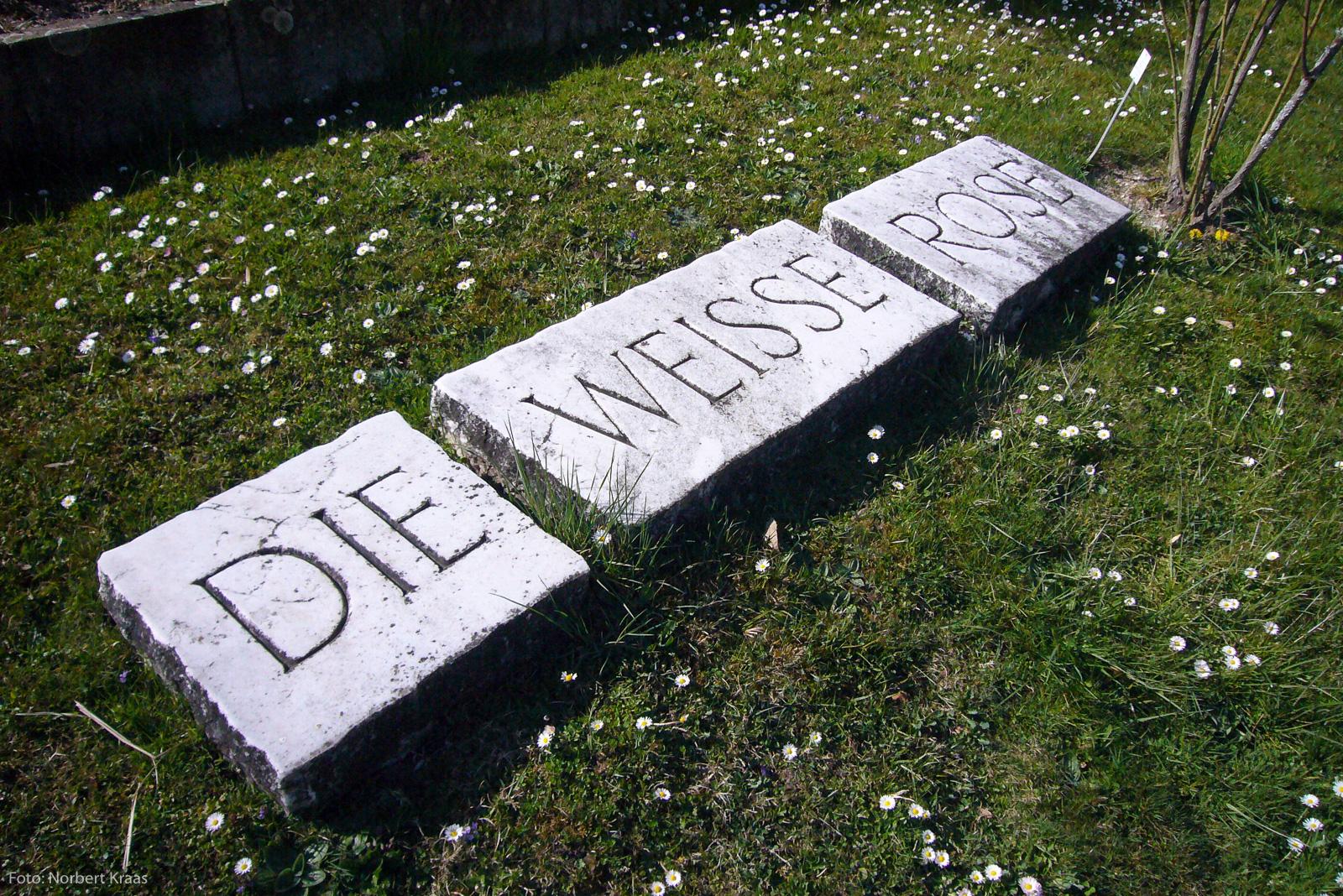 DIE WEISSE ROSE. In Stein gemeißeltes Epigramm von Karl Poralla im Botanischen Garten in Tübingen