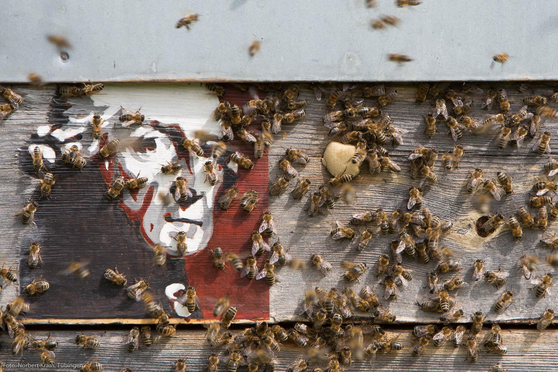 Wo Geist und Bienen zu Hause sind: Bienenkasten von Rickmer Stohp. Foto: Norbert Kraas, Tübingen